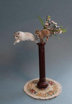 Elizabeth McInnis. Ok I am just in love with. Never seen a miniature in movement!!!