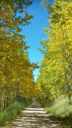 Fall in Colorado. Off the Million Dollar Highway