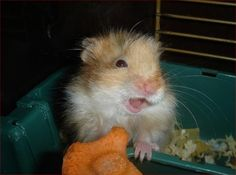 15 Delighted Hamsters