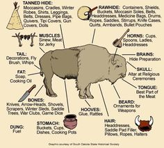 visual of how Native Americans used all the parts of a buffalo.Awesome visual of how Native Americans used all the parts of a buffalo. The Meaning of Native American Horse Markings Plains Bison vs Wood Bison Medicine Wheels & Shamanic Cosmology Native American Wisdom, Native American History, American Indians, American Bison, American Symbols, American Women, American Quotes, Native American Longhouse, Native American Hunting