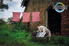 Два испанских изобретателя  Эдуардо Сегура и Андрес Диас  пытаются заинтересовать потребителя новой стиральной машиной для животных  . Аппарат рассчитан на мытье  кошек и собак  . Принцип его работы предельно прост: владелец животного   выбирает на дисплее размер и тип своего любимчика помещает питомца в специальный резервуар где его обдает водой  из нескольких специальных сопел и забирает уже чистого четвероногого друга. После этого грязная вода стекает через сливной шланг как и в обычной…