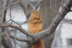 #funny #squirrel