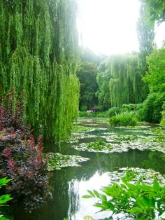 Giverny, France made famous by Claude Monet's paintings - Summer ~~ This is my favourite tree and Monet is my favourite painter. And Jehovah is my favourite Creator. Claude Monet, Beautiful World, Beautiful Gardens, Beautiful Places, Wonderful Places, Monet Garden Giverny, Vita Sackville West, Giverny France, Monet Paintings