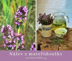 Mateřídouška úzkolistá Homemade, Health, Plants, Box, Snare Drum, Home Made, Health Care, Plant, Hand Made