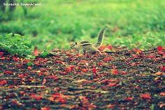 "Lalbagh, Karnataka, India For More - AmazingThings92.Tumblr.Com "" If You Like,Reblog & Follow """