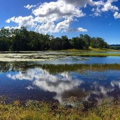 How's that for some unreal skyline reflections?! This fantastic shot was taken while exploring Lake MacDonald in the Noosa Hinterland. The lake is situated in picturesque landscapes and is a great recreation destination, with permitted activities including horse riding, boating and canoeing. Not to mention, the Noosa Botanical Gardens are right next door! Farm Gate, Bike Trails, Canoeing, Spa Day, Horse Riding, Boating, Botanical Gardens, Lush, Exploring