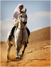 Philippe Paraskevas :The Egyptian Alternative :Breeding Arabian Horses Books