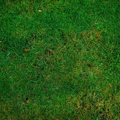 another-grass-texture-background.jpg (2480×2480)