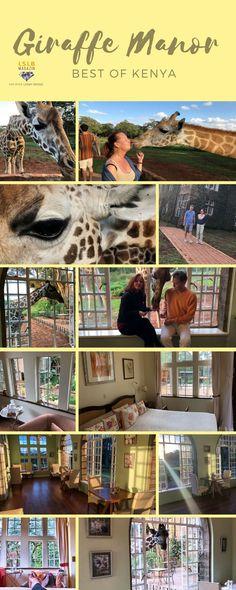 Best of Africa - Giraffen küssen in Nairobi - LSLB Magazin Nairobi, Safari, Kenya Travel, Black Sea, Tsunami, Goods And Services, All Over The World, Africa, Travel Tips