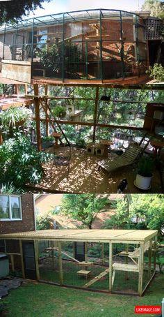 Outdoor cat enclosures - 8 PHOTO!