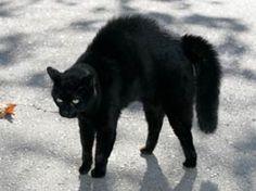 Black cat (not mine, but I've had 2 in my life so far...)