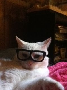 My cat, Snow, sporting some glassesI know she hated it. I quickly took them off afterwards. cute cats