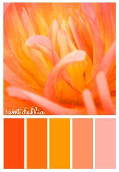 orange dahlia -Color Palette