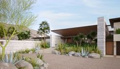 native plants & trees add the green to this Palm Springs contemporary home in Andreas Canyon | Kirkpatrick Architects