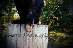 Kitten Claws - Shutter Photography Shutter Photography, Outdoor Furniture, Outdoor Decor, Shutters, Claws, Kitten, Blinds, Cute Kittens, Shades