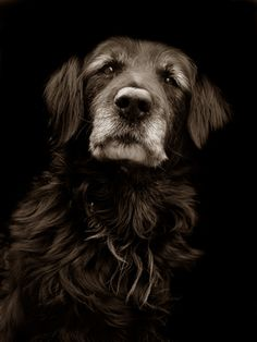 beautiful old dog