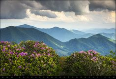 Spring Blooms on Appalachian Trail - Roan Mountain Highlands by Dave Allen Photography, via Flickr