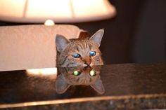 30 photos qui montrent le côté satanique des chats  2Tout2Rien