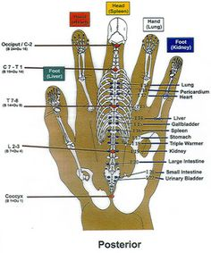 Lymph nodes in hand chart never press on an open wound swollen or check out this amazing korean hand reflexology chart modern institute of reflexology ccuart Gallery