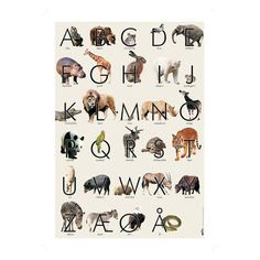 ABC plakat dyr
