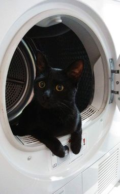 Black cat with Golden eyes doing the laundry… Schwarze Katze mit goldenen Augen beim Waschen … Cute Funny Animals, Cute Baby Animals, Cute Cats, Funny Cats, I Love Cats, Crazy Cats, Kittens Cutest, Cats And Kittens, Photo Chat