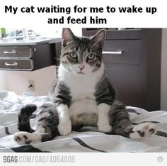 this is my cat but instead of waiting hell just keep meowing!