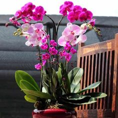 Buy and send graduation flowers from sendflowersandmore. Phalaenopsis Orchid, Pink Orchids, Orchid Plants, Exotic Flowers, Beautiful Flowers, Graduation Flowers, Growing Orchids, Orchid Arrangements, Orchid Care