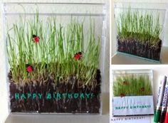 Grass seed grown in an old CD case. Great for viewing the root system. #artprojectsforkids