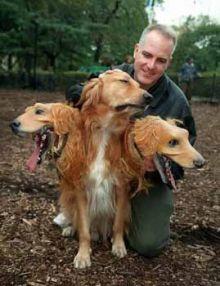 おもしろ ハロウィン 犬の画像(プリ画像)