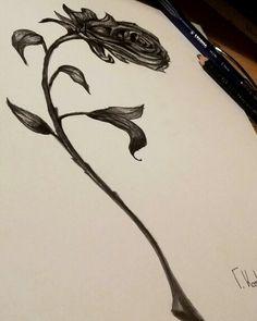 roses #drawing#sketch#rose#tattoo#design#pencil