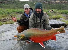 Arctic Char do grow even larger than this 20+ pound specimen, but rarely more colourful.