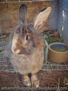 Amaranth & Kale: This bunny needs a name. Click through to read about her.