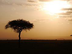 A foto foi tirada na Reserva Nacional Masai Mara.  A reserva fica no sul do Quênia e é famosa mundialmente pela quantidade de animais e pela Grande Migração.  Entre uma doação e outra paramos para fazer o safári e levamos um tempo até conseguirmos a foto perfeita: a árvore solitária da savana.
