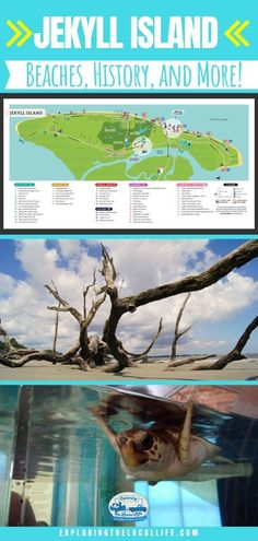 Ever thought about visiting Jekyll Island in Georgia? Find out where to go, where to stay, and what to eat! It's a must when visiting The Peach State. Travel Hack, Rv Travel, Time Travel, Travel Destinations, Travel Tips, Jekyll Island Campground, Travel With Kids, Family Travel, Beach House Restaurant