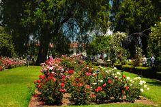 Rose Garden at The Huntington Gardens