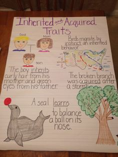 Inherited and Acquired Traits anchor chart