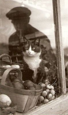 Cat in window. Old photo