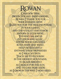 The Rowan tree is a tree with deep mythological roots, spanning Greek, Norse, and Celtic mythology. It is the wood used to make rune staves, and is said to offer protection against curses and enchantm