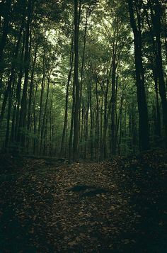 Dark Forest, Photo by 張青, via Flickr