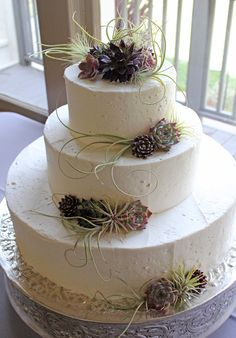 purple & green succulent wedding cake. nice colors, but I think I like coral and teal better