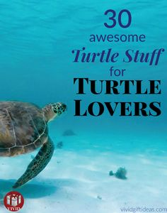 30 cute gifts for sea turtle lovers in your life. Dinosaur Age, Unique Gifts, Best Gifts, Turtle Gifts, Turtles, Lovers, Messages, Gift Ideas, People