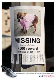 Bosch Vacuums - Little Dogs Beware