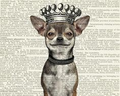 just bought this for my hubby. It looks exactly like our first baby! chihuahua smiling dog with crown printed on page by FauxKiss, $10.00