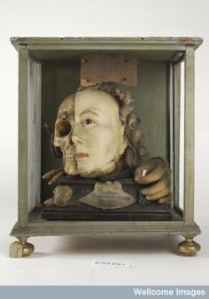 Wellcome Library, London   A Vanitas tableau of a life sized head, on one side resembling Queen Elizabeth I, the other half a skull with attendant insects and reptiles, made from wax.  18th Century