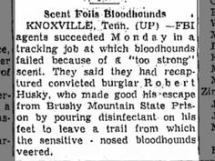 Tampa Daily News (Texas) 15 Jan 1957 Scent Foils Bloodhounds