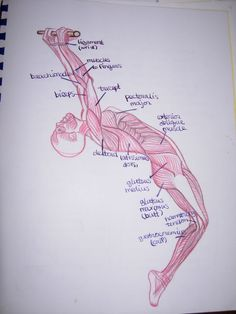 waldorf anatomy