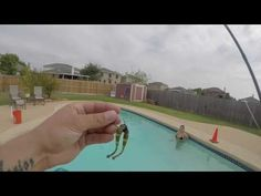 Bass Fishing Tips and Techniques - Wacky Worm Action Underwater . - (More info on: https://1-W-W.COM/fishing/bass-fishing-tips-and-techniques-wacky-worm-action-underwater-2/)