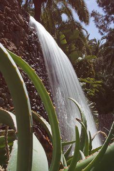 Palmitos- Park botaniczno-zoologiczny z różnymi gatunkami roślin i zwierzątm.in. papugi , delfiny, ptaki drapieżne itd.
