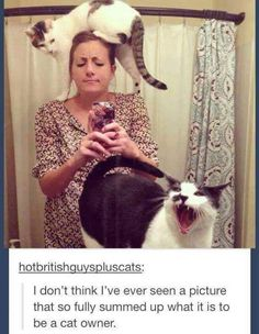 Cats are proof the internet loves us and wants us to be happy.