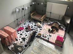Guinea Pig Hutch, Guinea Pig House, Pet Guinea Pigs, Guinea Pig Care, Pet Bunny Rabbits, Pet Rabbit, Bunnies, Indoor Guinea Pig Cage, Indoor Rabbit